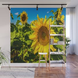 Here Comes the Sun - Giant Sunflower on Sunny Day in Kansas Wall Mural