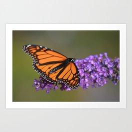 Monarch butterfly on violet flower Art Print
