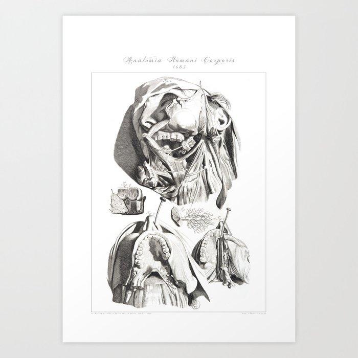 Human Anatomy Art Print Jaw Teething Mandible Vintage Anatomy