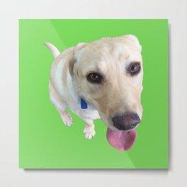 Green dog Metal Print