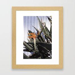 sun+flower Framed Art Print