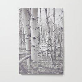 Black and White Aspens Metal Print