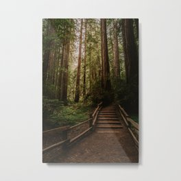 Muir Woods | California Redwoods Forest Nature Travel Photography Metal Print