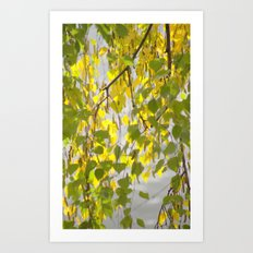 Birch Leaves 7165 Art Print