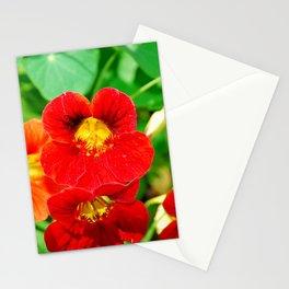 Winter Park Nasturtium 2 Stationery Cards