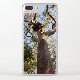 Scribbly Gum Tree, Muogamarra Reserve, Sydney Clear iPhone Case