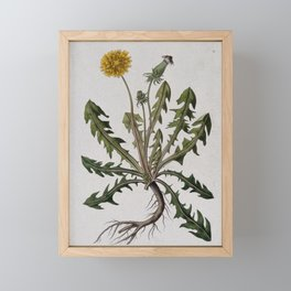 Botanical Dandelion Framed Mini Art Print