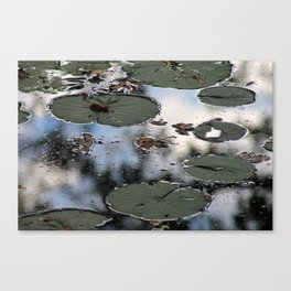 Lily Pads at the Arboretum Canvas Print