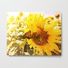 Monarch butterfly resting on a sunflower in the summer sun Metal Print
