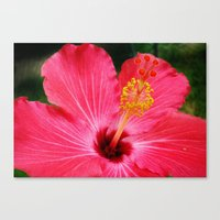 hibiscus Canvas Prints featuring hibiscus by Dottie