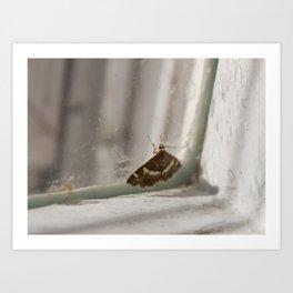 Moth in a Window Art Print