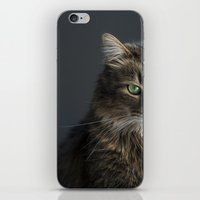 maine iPhone & iPod Skins featuring Maine Coon by Joyce Vincent