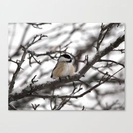 Winter Windblown Black-Capped Chickadee Canvas Print