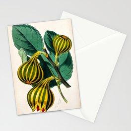 Fig plant, vintage illustration Stationery Cards