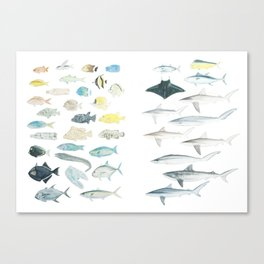 The Inhabitants of the Waters of Clipperton Atoll (both 1 and 2) Canvas Print