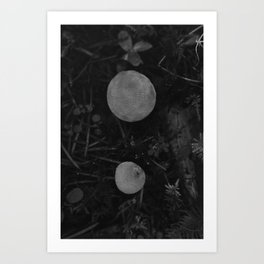 Young Puffball Mushrooms in Black and White Art Print