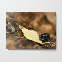 Beetle and his journey Metal Print