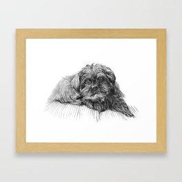 Shih Poo Resting Framed Art Print