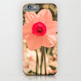 Spring Soft Pink Daffodil Blossom iPhone Case