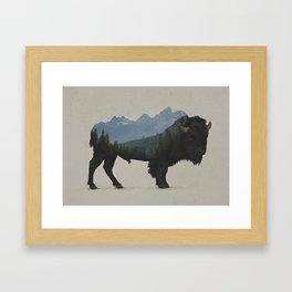 Grand Teton Bison Framed Art Print