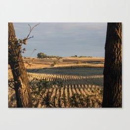 Autumn Corn Canvas Print