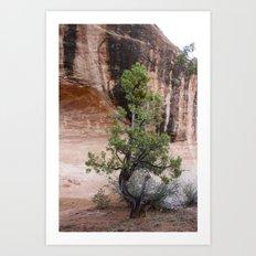 Desert Soloist Art Print
