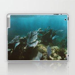 Mexican Caribbean Sealife Laptop & iPad Skin