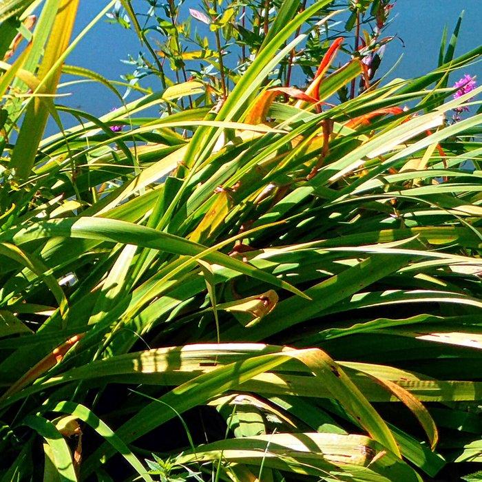 Flowers at the pond Leggings