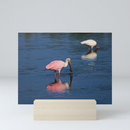 Roseate Spoonbill at Ding III Mini Art Print