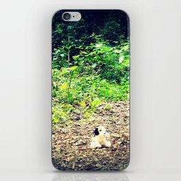 Lost Puppy Dog iPhone Skin