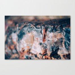 petrified II Canvas Print