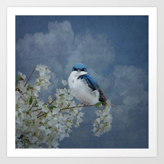 Tree Swallow Art Print