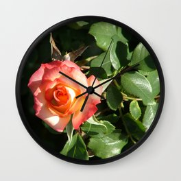 Pink and yellow rose in the sun Wall Clock