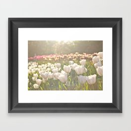 Tulips sunbathed Framed Art Print