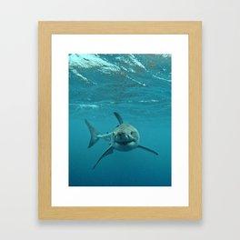 Great White Shark Carcharadon carcharias Framed Art Print