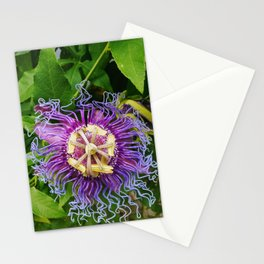 Passionflower (2018), a Society6 exclusive Stationery Cards