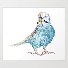 Parakeet - Blue Budgie Art Print
