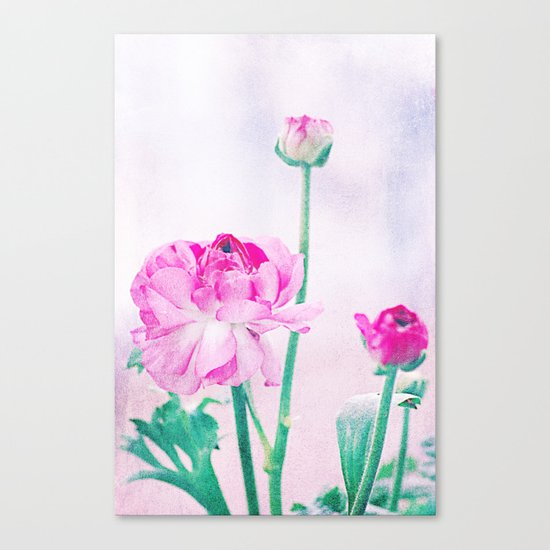 Vintage Ranunculus (7) Canvas Print