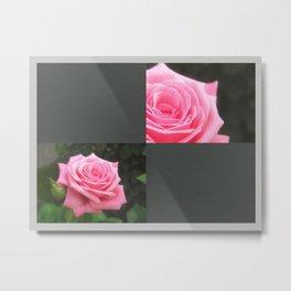 Pink Roses in Anzures 4 Blank Q6F0 Metal Print