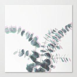 Eucalyptus Shadows II Canvas Print