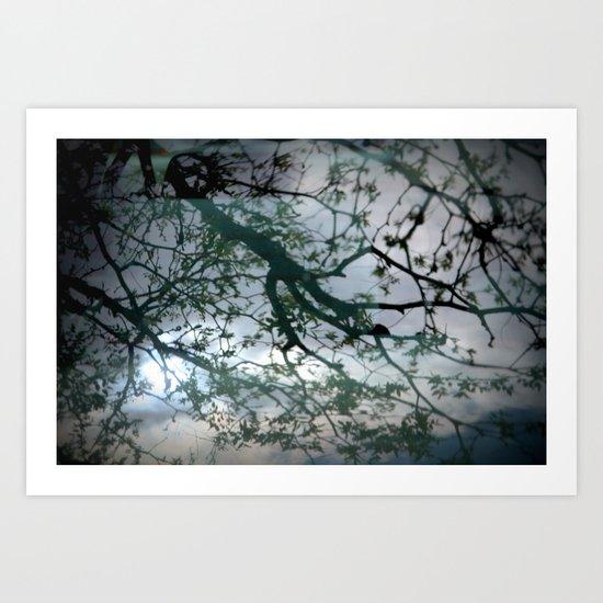tree mystery Art Print