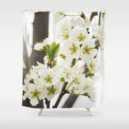 Plum Tree Blossom Shower Curtain
