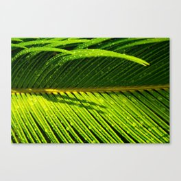 Showered Leaf  Canvas Print