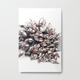 Gooseneck pine Metal Print
