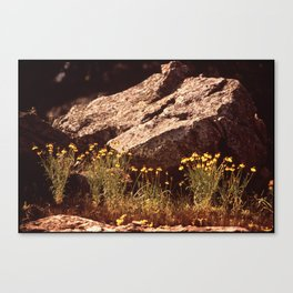Central Texas - Near Lake Travis Canvas Print