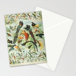 Adolphe Millot - Nouveau Larousse Illustré - Oiseaux B (Birds) (1906) Stationery Cards