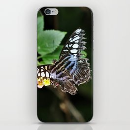 Butterfly 4 iPhone Skin
