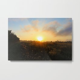 Early Morning in the Peach Trees Metal Print