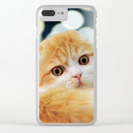 Young Scottish Fold cat Clear iPhone Case