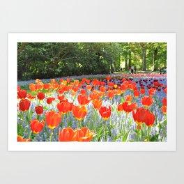 Sunny Tulips Art Print